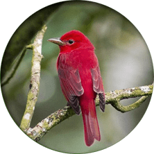 Monteverde Cloud Forest Bird